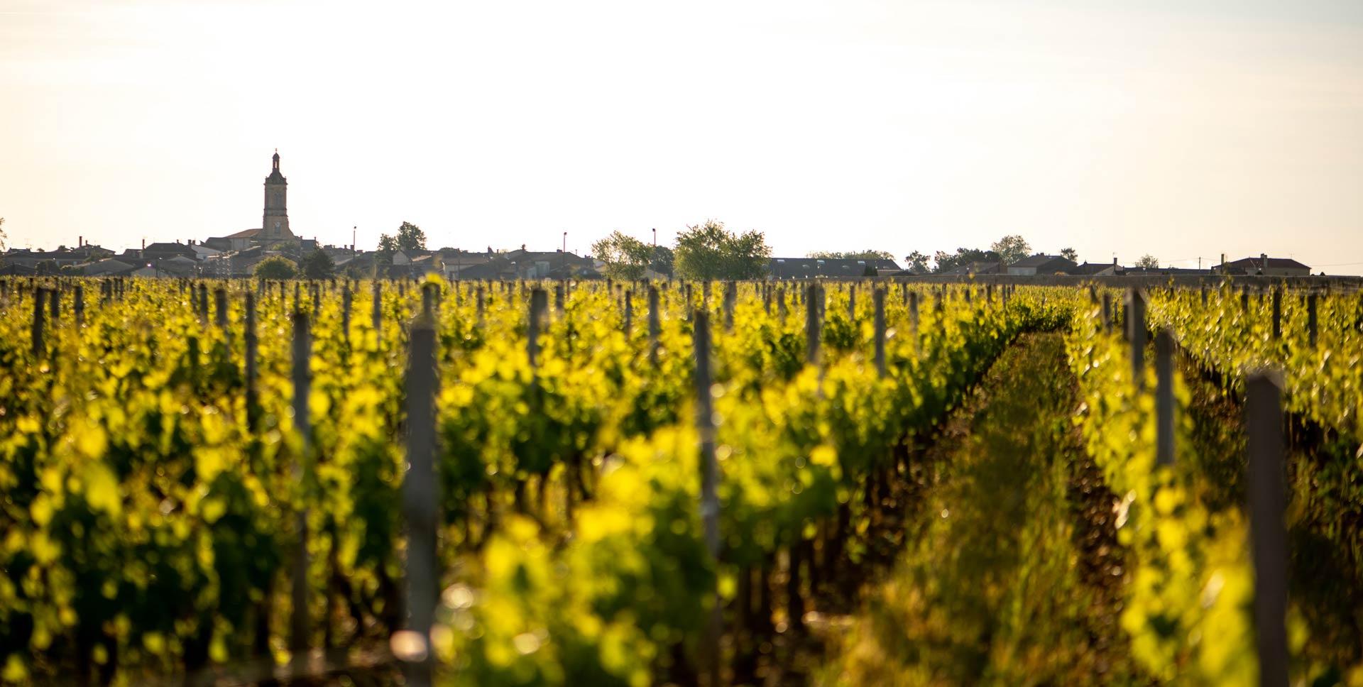 Chateau-Petit-Bocq-vignoble-bordeaux-2